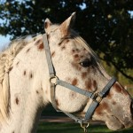 Sonny a rescued pony