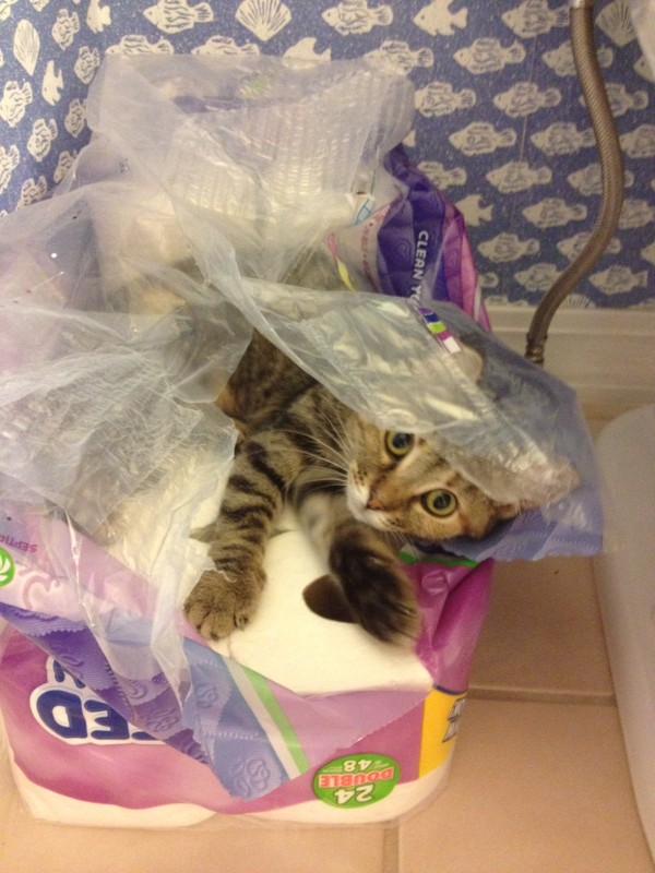 Kitty in Paper towels