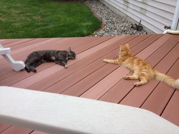 kitties on porch