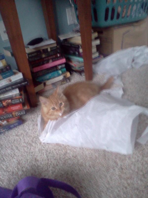kitty on pillow
