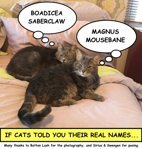 cats name calling