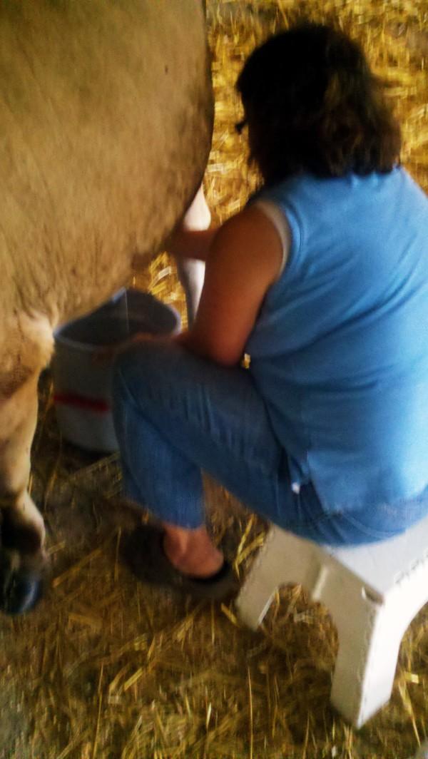 author-milking